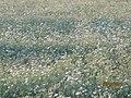 Beautiful Ranch of Porbandar Raju Odedra Mo . . . 07698787895 - panoramio (7).jpg