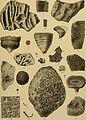 Beiträge zur Paläontologie und Geologie Österreich-Ungarns und des Orients - Mitteilungen des Geologischen und Paläontologischen Institutes der Universität Wien (1900-1901) (20363605505).jpg