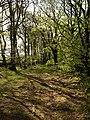 Belt of trees near Pepperdon Down - geograph.org.uk - 1290959.jpg