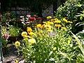Benkid77 Garden Flowers 2 070807.JPG