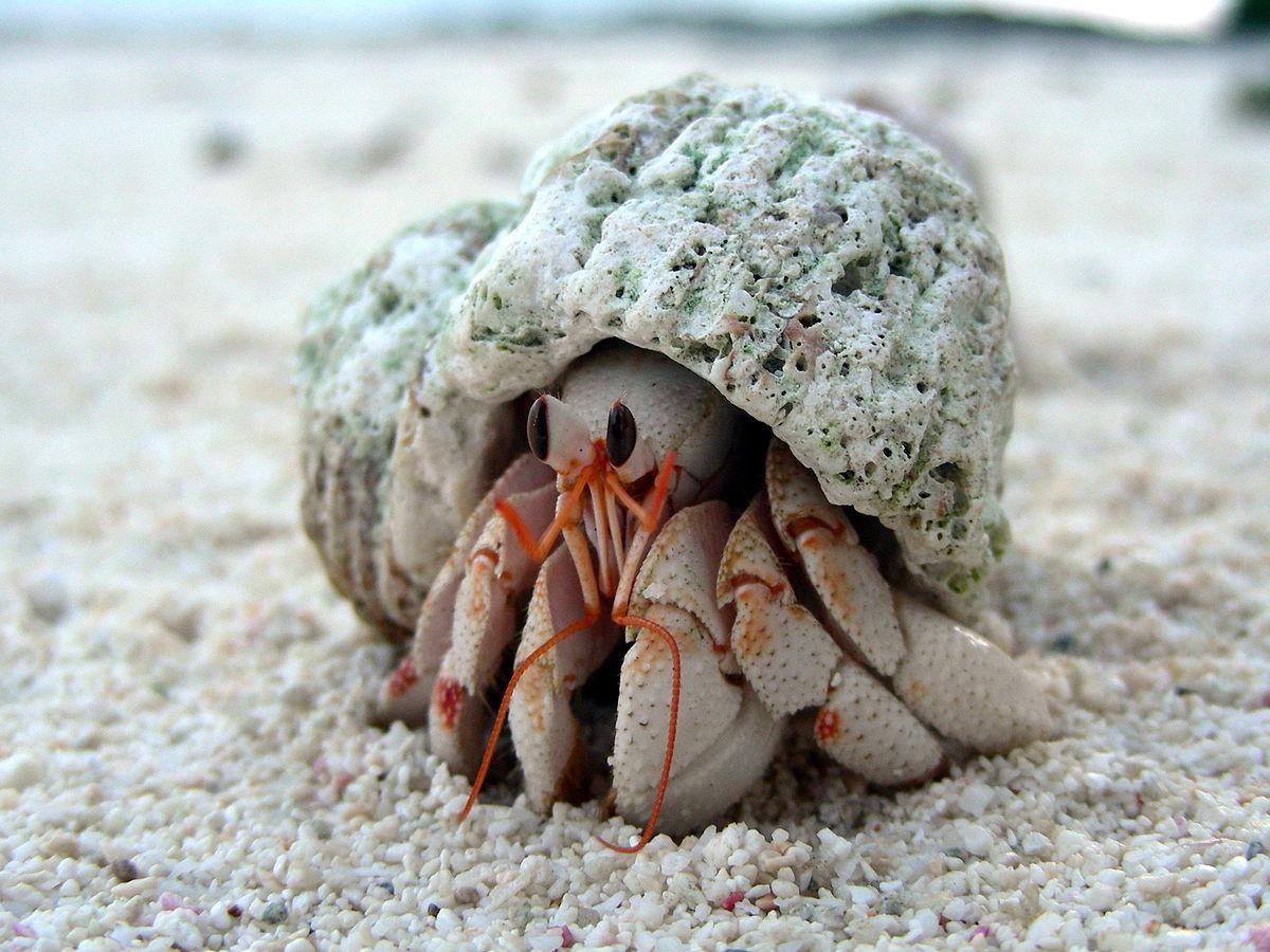 Hermit Crab Fun Facts
