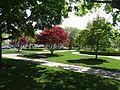 Beverly Common.jpg