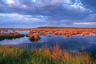 Big Branch Marsh National Wildlife Refuge - Image: Big branch marsh nwr
