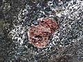 Big garnet amphibolite (Precambrian; Warrensburg, Adirondack Mountains, New York State, USA) 55.jpg