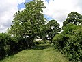 Bishop Middleham through the trees - geograph.org.uk - 473083.jpg