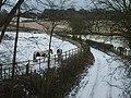 Blackpit Lane Horses - geograph.org.uk - 1690342.jpg