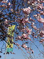 Blossoms in Dronten 11.JPG