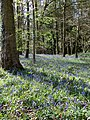 Blue haze - Kidnalls - April 2012 - panoramio.jpg