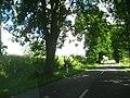 Bocianie gniazdo przy DW 103 na wschód od Kamienia Pomorskiego.jpg