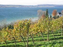 260px-Bodensee_Weinbau_Birnau