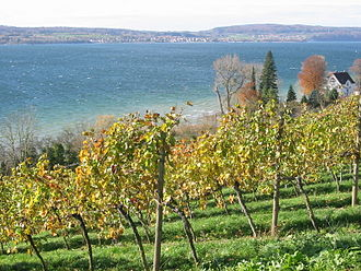 Baden (wine region) - Vineyards on Lake Constance, the southernmost part of Baden as well as the southernmost vineyards in Germany.