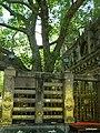 Bodhi Tree - panoramio (1).jpg