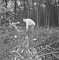 Bosbewerking, arbeiders, boomstammen, gereedschappen, Bestanddeelnr 251-9152.jpg