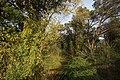 Bosc de ribera de la riera del Vilar.jpg