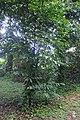 Botanic garden limbe139.jpg