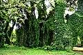 Botanic garden limbe37.jpg