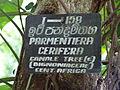Botanical Garden of Peradeniya 54.JPG