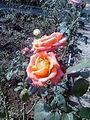 Botany Garden Toranmal.jpg