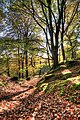 Bracklin Woods In Autumn - panoramio.jpg