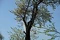Brandeisatz Baum Flur Böschung (39758567120).jpg