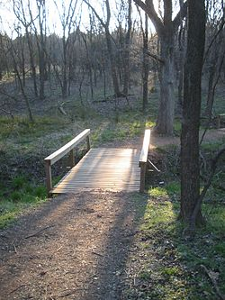 A footbridge over a small stream in a wood