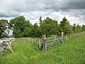 Bridleway and plantation - geograph.org.uk - 1407135.jpg