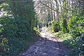 Bridleway down Tenants Hill - geograph.org.uk - 1730787.jpg