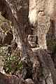 Briggs Bluff Walk, Grampians National Park, Victoria Australia (4871023141).jpg
