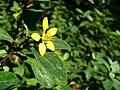 Brightflower5.jpg