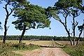 Brldleway on the Elveden Estate - geograph.org.uk - 545907.jpg