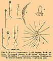 Brockhaus and Efron Encyclopedic Dictionary b22 932-2.jpg