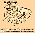 Brockhaus and Efron Encyclopedic Dictionary b69 100-0.jpg