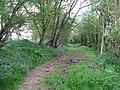Buckhatch Lane bridleway - geograph.org.uk - 1275449.jpg