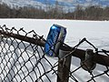 Bud Light in the environment, Lexington MA.jpg