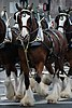 Budweiser Clydesdales Boston.jpg