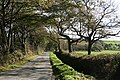 Bulkworthy, lane to Downmoor Cross - geograph.org.uk - 590969.jpg