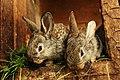 Bunnies (107592675).jpeg