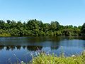 Busserolles étang bord D88 nord Villotte (2).JPG