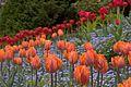Butchart Gardens (145584324).jpg