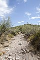 Butcher Jones Trail to Pinter's Point Loop, Tonto National Park, Saguaro Lake, Ft. McDowell, AZ - panoramio (137).jpg