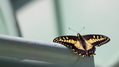 Butterfly on Forest Service Vehicle (9423253381).png