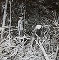 COLLECTIE TROPENMUSEUM Mannen aan het werk in een bamboebos TMnr 60052401.jpg