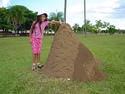 A clay ant hill