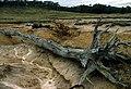 CSIRO ScienceImage 1372 Soil Erosion.jpg
