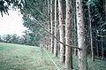 CSIRO ScienceImage 644 Pasture and Plantation Comparison for Soil Changes.jpg