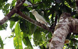 Frei lebendes Pärchen auf Palawan