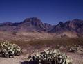 Cacti break the monotony of the Nevada desert LCCN2011634260.tif