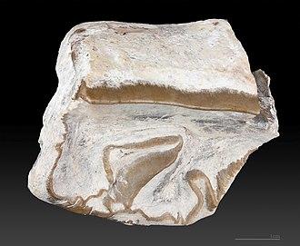 Paratype - Paratype of Cadurcotherium nouleti – MHNT