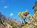 Caldera Taburiente La Palma (29685683554).jpg
