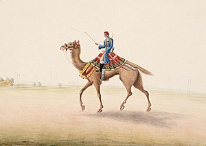 Camel cavalry - A camel rider in Bihar, India in 1825